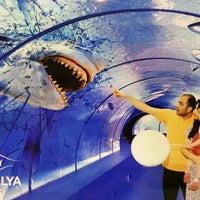 5/12/2013 tarihinde Fatih A.ziyaretçi tarafından Antalya Aquarium'de çekilen fotoğraf
