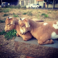 Photo taken at The Belmont Goats by Olivia on 6/27/2013