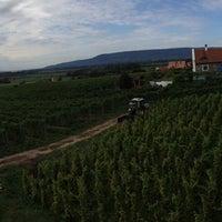 Photo taken at Szászi Pincészet by Raivo S. on 9/29/2015