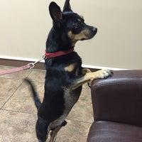 9/19/2015にemma t.がBluePearl Veterinary Partnersで撮った写真