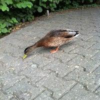 Das Foto wurde bei Tierpark EuregioZoo von Jens-Peter B. am 8/14/2013 aufgenommen