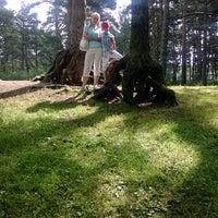 Photo taken at булонский лес by Наталья С. on 7/30/2014