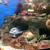 Photo taken at Birch Aquarium At Scripps Institution of Oceanography by Marina on 6/14/2013