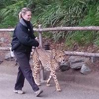 2/5/2013 tarihinde Terence E.ziyaretçi tarafından Cheetah Run'de çekilen fotoğraf