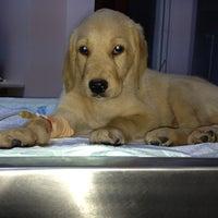 8/9/2013 tarihinde Hasret T.ziyaretçi tarafından Pet 312 Veteriner Kliniği'de çekilen fotoğraf