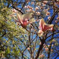 Foto scattata a Orto Botanico di Brera da Davide B. il 4/13/2013