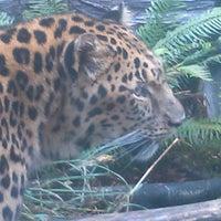 9/24/2013 tarihinde Gypsy R.ziyaretçi tarafından Oregon Zoo'de çekilen fotoğraf