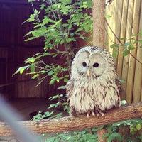 Das Foto wurde bei Зоопарк «Лимпопо» von Prosto S. am 5/21/2013 aufgenommen