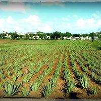 Foto tomada en Aloe Vera Plantation. por Remco E. el 5/23/2013