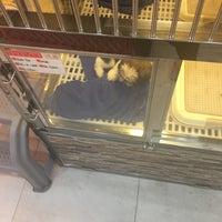 Photo taken at Mega Pet 寵物城 by Nick Z. on 7/29/2017