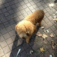 Photo taken at Quinta de Olivos Walking Trail & Dog Run by Maria Laura G. on 5/29/2013