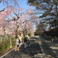 Photo taken at Tsukayama Park by Yusuke K. on 4/4/2017