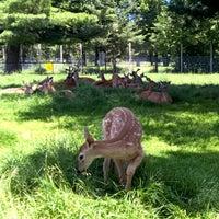 Photo taken at Wildwood Wildlife Park by Scott F. on 7/15/2015