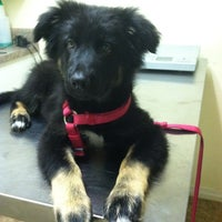 Photo taken at San Francis Veterinary Hospital by Peggy H. on 6/14/2013