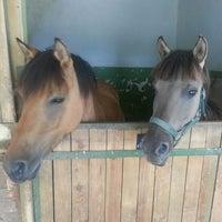 6/30/2013 tarihinde TC Berna M.ziyaretçi tarafından Gürman At Çiftliği'de çekilen fotoğraf
