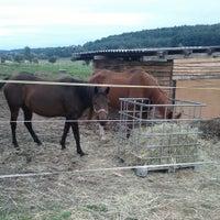 Photo taken at Útulek pro týraná zvířata Ranch Dreamhorses by Daniel N. on 9/14/2013