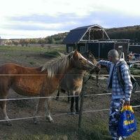 Photo taken at Útulek pro týraná zvířata Ranch Dreamhorses by Daniel N. on 10/27/2013