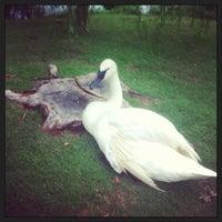 Photo taken at Swan Lake by Megan M. on 6/21/2013