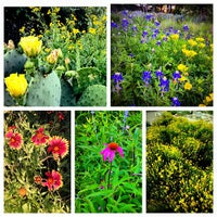 Photo taken at Lady Bird Johnson Wildflower Center by Brooke M. on 5/4/2013