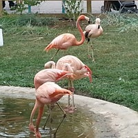 7/21/2013 tarihinde Kit W.ziyaretçi tarafından Indianapolis Zoo'de çekilen fotoğraf