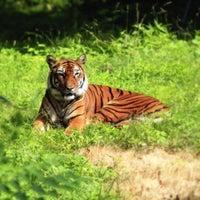 Photo prise au Bronx Zoo par Michael D. le6/22/2013