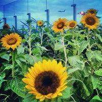Das Foto wurde bei Sunflower Garden von Kamarul A. am 1/12/2013 aufgenommen