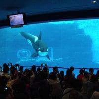Photo taken at Port of Nagoya Public Aquarium by せき ひ. on 9/8/2013