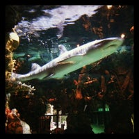 Photo taken at Rainforest Cafe by Anthony B. on 9/30/2012