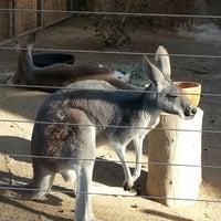 Photo taken at Kangaroo Exhibit by Yana on 9/26/2013
