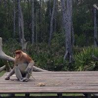 Photo taken at Labuk Bay Proboscis Monkey Sanctuary by Jade C. on 9/6/2015