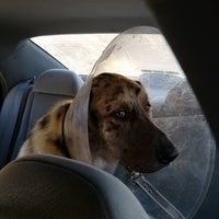 Photo taken at Kings Highway Animal Clinic by Bryon L. on 1/31/2013