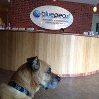 6/11/2013にSarahがBluePearl Veterinary Partnersで撮った写真