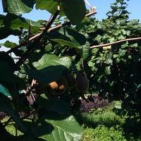 รูปภาพถ่ายที่ киви сад โดย Наталья К. เมื่อ 7/23/2014