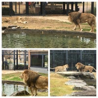 Photo taken at George H. Carroll Lion Habitat by James M. on 12/6/2017