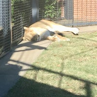 Photo taken at George H. Carroll Lion Habitat by James M. on 10/30/2017