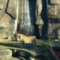 Photo taken at George H. Carroll Lion Habitat by James M. on 11/28/2017