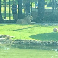 Photo taken at George H. Carroll Lion Habitat by James M. on 9/26/2017