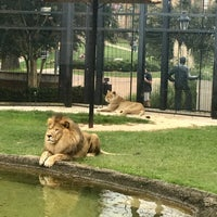 Photo taken at George H. Carroll Lion Habitat by James M. on 9/5/2017