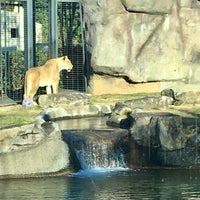 Photo taken at George H. Carroll Lion Habitat by James M. on 12/11/2017