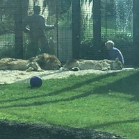 Photo taken at George H. Carroll Lion Habitat by James M. on 10/2/2017