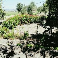 Photo taken at Anneanne-Dede Çiftliği by Elif O. on 8/14/2016