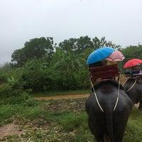 Photo taken at Safari Elephant by Pınar H. on 10/12/2017