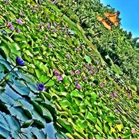 Photo taken at Sihai Park by Kyle M. on 9/9/2014
