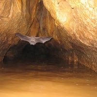Photo taken at Cavernas de Venado by Mila D. on 10/25/2014