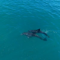 Photo taken at Dolphin Maroma By Dolphin Discovery by Kirill S. on 2/8/2014