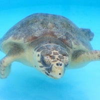 Photo taken at Loggerhead Marinelife Center by Janine on 1/10/2013