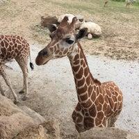 Photo taken at Giraffe Complex by Heidi W. on 7/24/2016