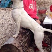 Photo taken at Istanbull's American Bulldog Club by 'Dilay Atakan T. on 11/9/2014