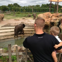 Photo taken at Tampa's Lowry Park Zoo by Janel E. on 7/4/2013