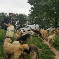 Photo taken at Adapazarı Belediyesi Sahipsiz Hayvanlar Geçici Bakımevi by Furkan Ö. on 4/23/2016